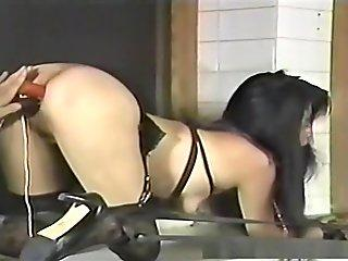 Office hottie with a collar gets teased and used up